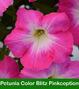 Petunia Choose Your Color Hanging Basket